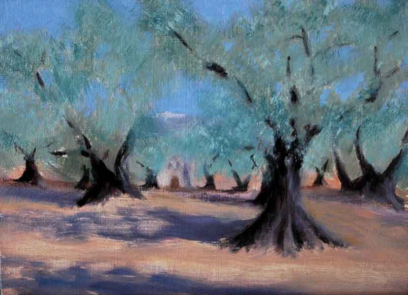 Olive Trees in Nyons Provence