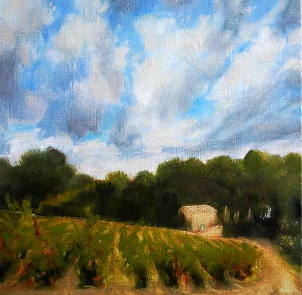 Vines in la Dindoulette, Provence #56