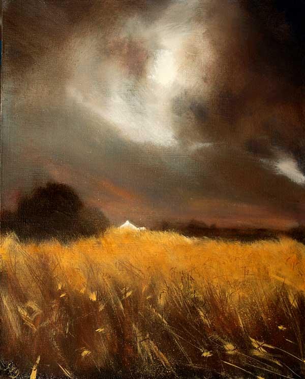 Barley field Ireland